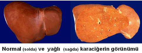 yagli_kc21